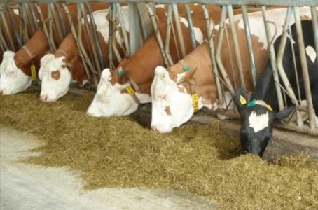 Курсовая работа: Учет животных на выращивании 1