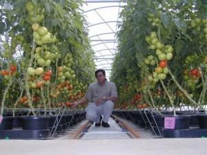 Гидропоника — метод для выращивания денег