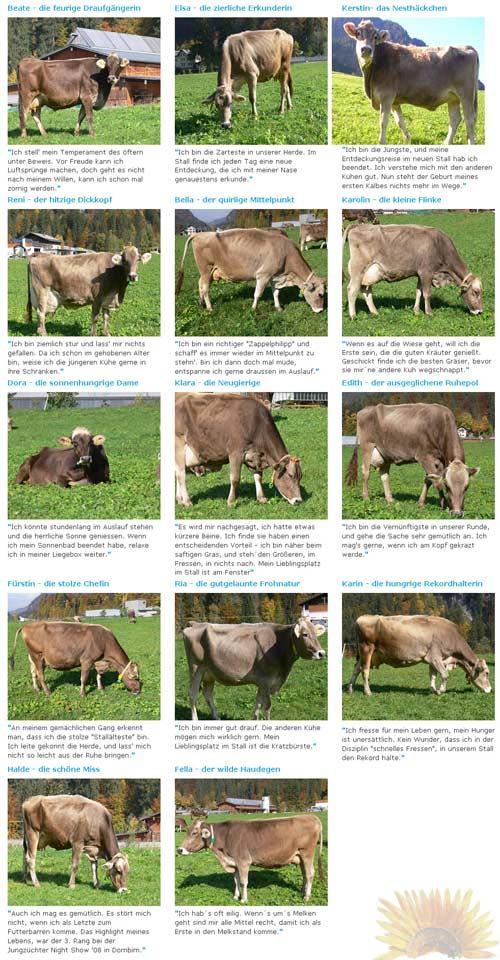 Бизнес идея: услуга - корова в аренду, на примере фермерской семьи Эрат (Erath)
