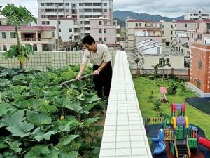 Идеи своего дела: Фермерский бизнес в центре города