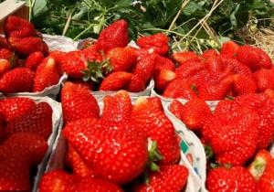 Идеи для бизнеса: Выращивание клубники на продажу