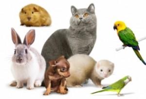 Зообизнес: создание профессиональных фото и видео домашних животных