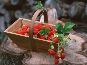 Идеи своего дела: выращивание земляники