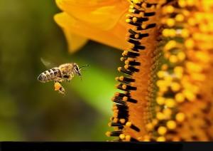 Реклама и пчёлы ,что общего?
